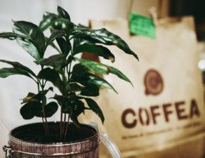 Coffea 15Settembre2017 038 292x225 Il Nostro Shop